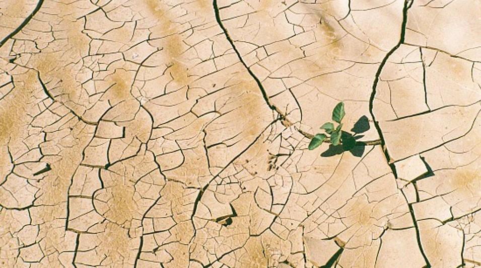 Desert plant growing through the cracks